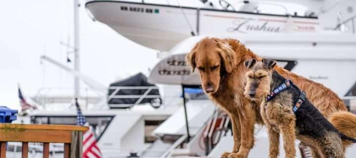 狗与tagg gps跟踪器
