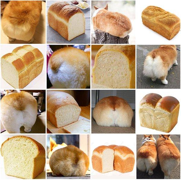 Corgi or loaf of bread image recognition example