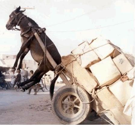 donkey wagon overload