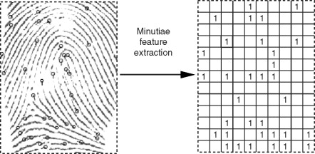 Extracting minutiae from a fingerprint scan